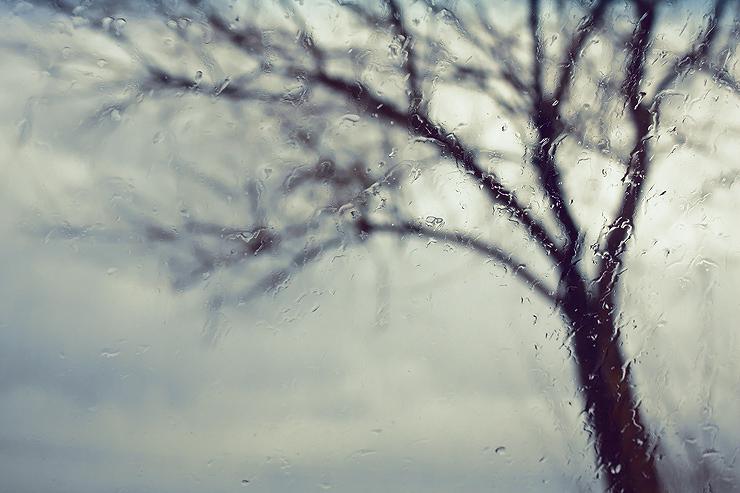 Photo Credit: seyed mostafa zamani, via Flickr Creative Commons